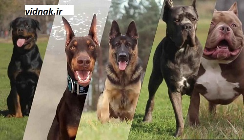 The wildest dog breed in the world