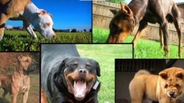 The wildest dog breed in the world (2)