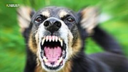 شکنجه سگ نجات سگ زنده به گور شده