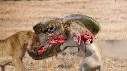 مستند-جنگ-خطرناک-ترین-حیوانات-وحشی