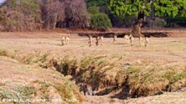 Animal Documentation (Hunting)