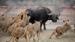 Hunting animals (2)
