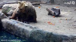 Kind Bear