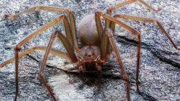 Spider Food