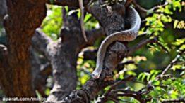 Wildlife Documentary