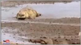 حمله حیوانات و جنگ و نبرد حیوانات وحشی