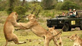 حیات وحش آفریقای جنوبی