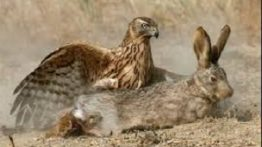 خفن ترین صحنه های شکار حیوانات وحشی ( Animal hunting )