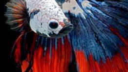 زیباترین ماهی های دنیا