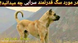 سگ سرابی