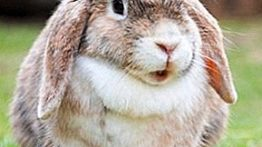 شکنجه خرگوش ها شکار خرگوش توسط وحشی ترین حیوانات در مزرعه با کیفیت SUPER HD