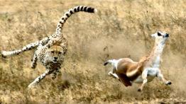 فوق العاده ترین صحنه های شکار حیوانات وحشی