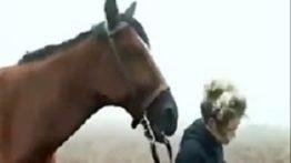 مستند حیات وحش اسب ها