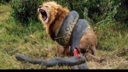 مستند شکار حیوانات مرگبار