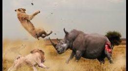 نبرد بین حیوانات وحشی