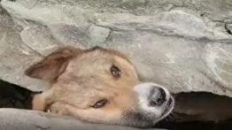 نجات جان یک قلاده سگ ماده به همراه تولههایش که در بین صخره ای گیر افتاده بودند.