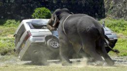 گلچین حمله حیوانات به انسان