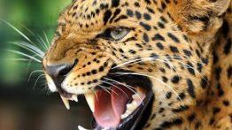 10 شکار بسیار زیبا در دنیای حیوانات وحشی