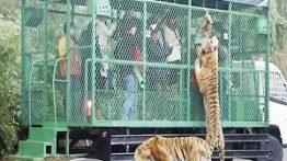 باغ وحشی که در آن حیوانات آزاد، اما انسان ها در قفس اند!