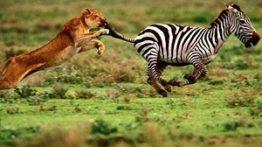 جنگ حیوانات با انسان ها جالب و دیدنی+18