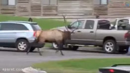 حملات هولناك حيوانات وحشي به انسان ها كه توسط فیلمبرداران شكار شده است