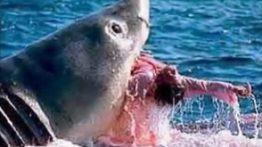 حمله حیوانات آبی به انسان