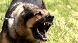 خشم و حمله حیوانات وحشی