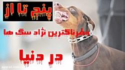 خطرناکترین نژاد سگ