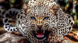 درنده ترین و کشنده ترین حیوانات جهان