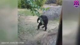 میمون بی اعصاب در باغ وحش