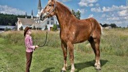 یزرگترین اسب های دنیا سوپر