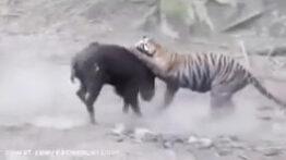 جنگ و نبرد حیوانات
