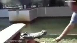 حملات ترسناک تمساح به انسان