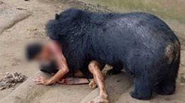 حمله ناگهانی حیوانات به انسان