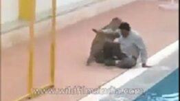 حمله پلنگ به مردم شهر در هند