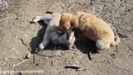 دعوای توله سگ