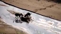 شکار حیوانات, جنگ حیوانات