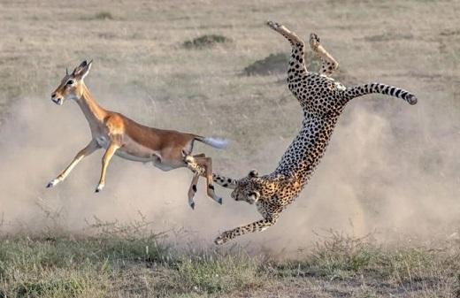 شکار-حیوانات-وحشی-2-1