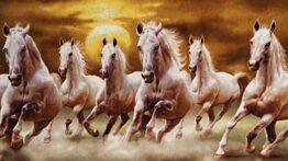 فصل جفت گیری گله های اسب وحشی