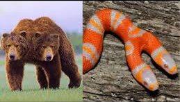 چهار حیوان که باور تان نمیشود وجود داشته باشد.