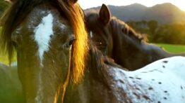 15 نژاد افسانه ای اسبها
