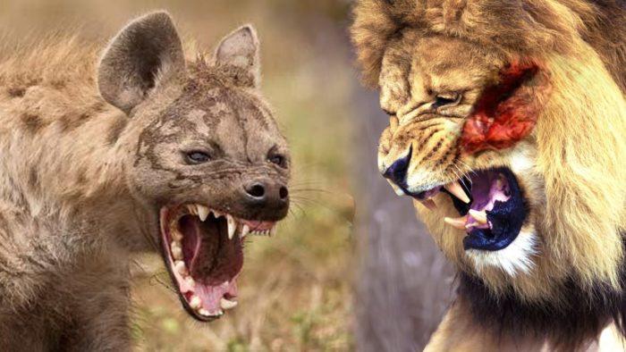 شکار حیوانات و جنگ حیوانات +عکس
