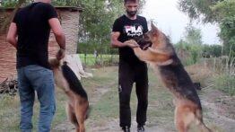آموزش کامل فرمان نخور به سگ