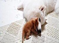 بازی بچه گربه خوشگل با سگ سفید