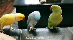 بامزه ترین و خنده دارترین طوطی ها