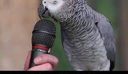 حرف زدن طوطی بامزه