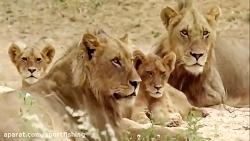 حیات وحش افریقا