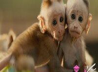عکس زیباترین حیوانات دنیا