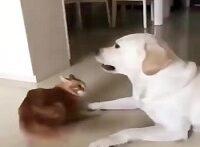 نبینی ضرر کردی گلچین سگ و گربه