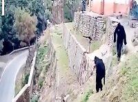 گوریل های قلابی میمونها را فراری میدهند چه بامزه